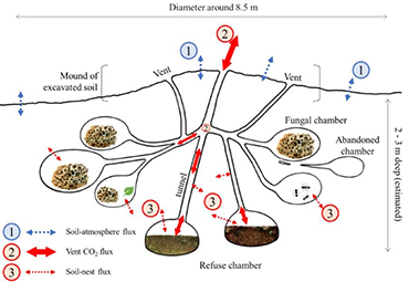 Diagram of a leaf-cutter ant nest.