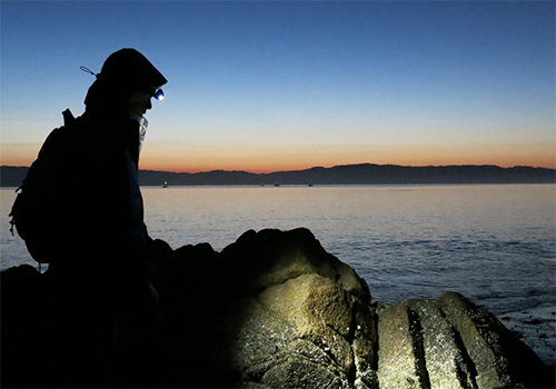 Most of Schiebelhut's doctoral fieldwork was done on rocky shores in California.